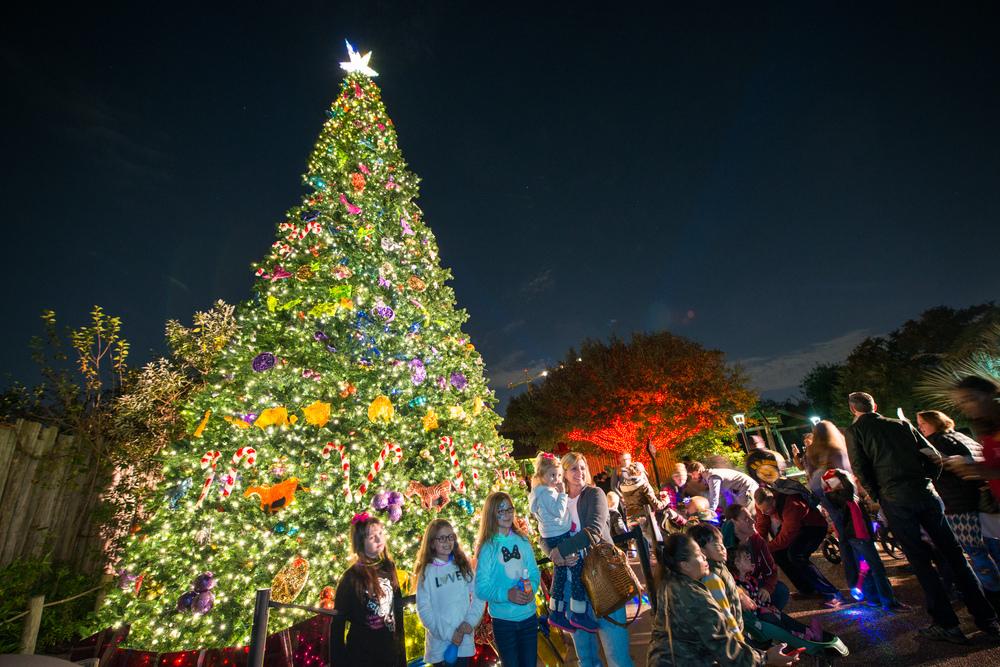 Houston Zoo Txu Energy Presents Zoo Lights Zoo Lights